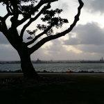 Czy w miastach można wchodzić na drzewa?